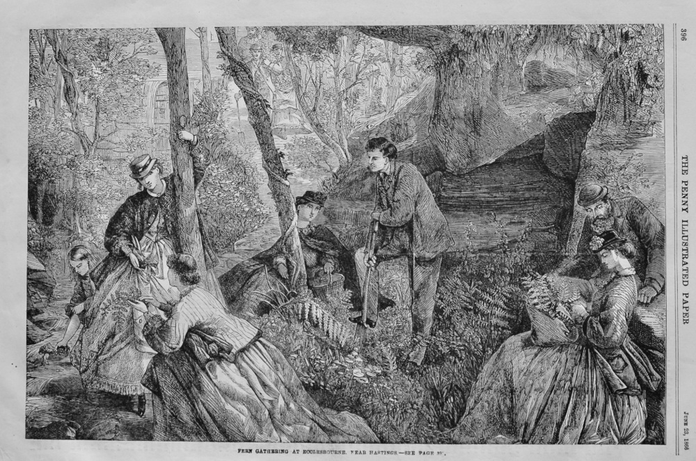 Fern Gathering at Ecclesbourne, near Hastings.  1866.