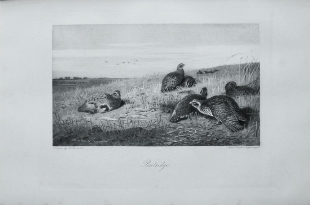 Partridge - 1898