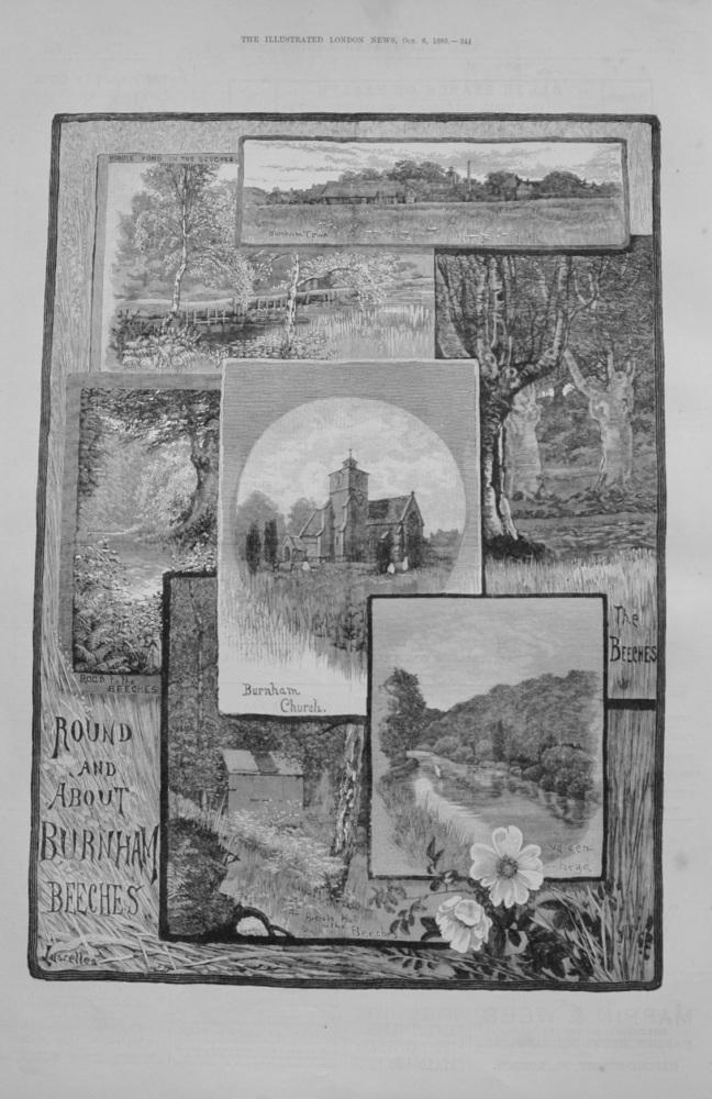 Burnham Beeches - 1883