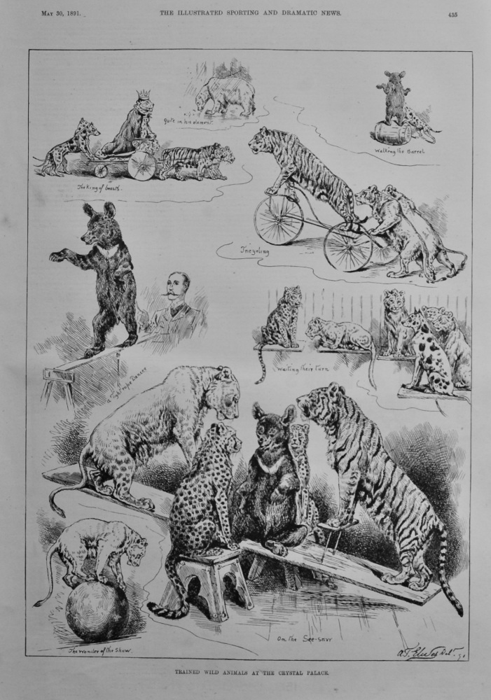 Trained and Wild Animals at the Crystal Palace.  1891.