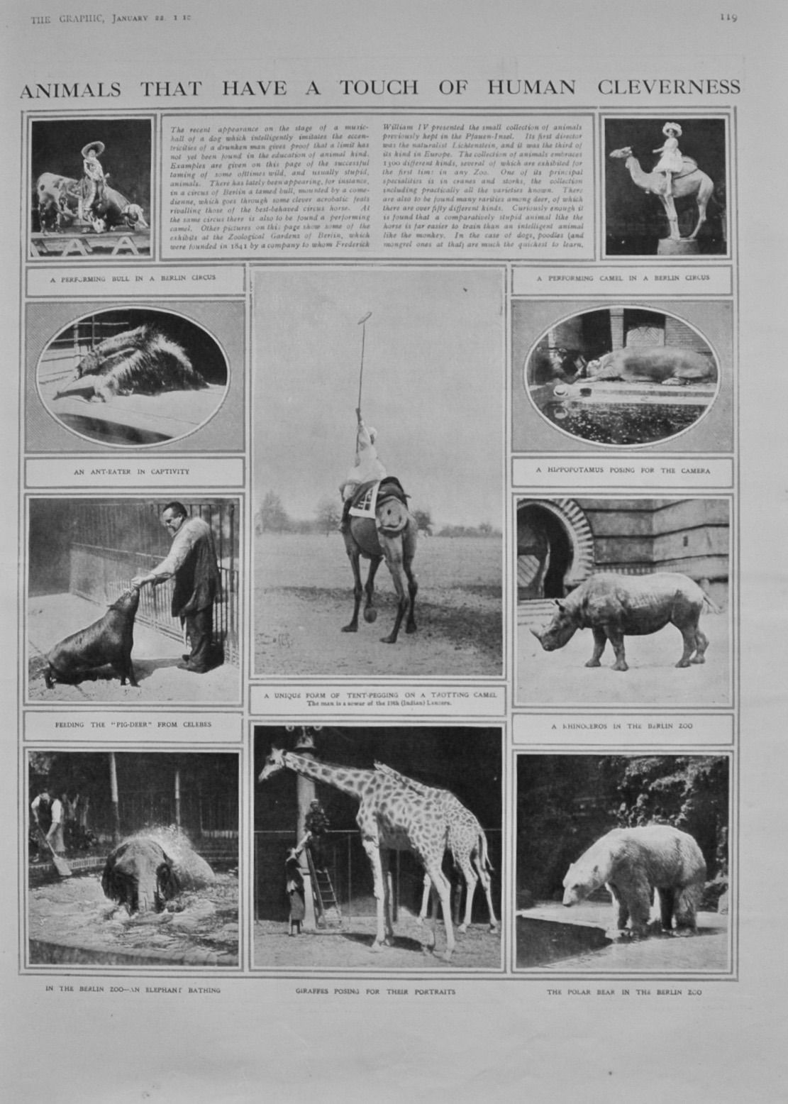 Animals that have a touch of Human Cleverness - 1910