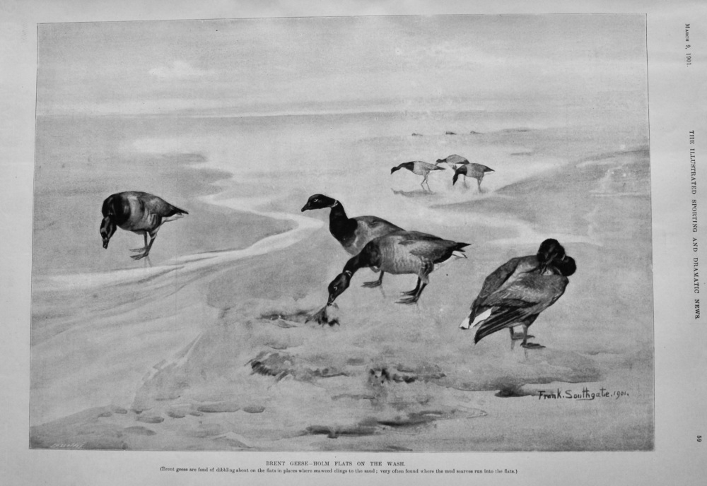 Brent Geese- Holm Flats on the Wash.  1901.