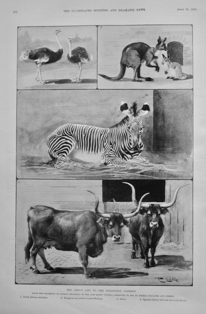 The King's Gift to the Zoological Gardens.  1901.