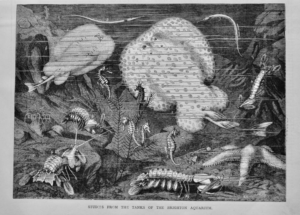 Studies from the Tanks of the Brighton Aquarium. 1878.