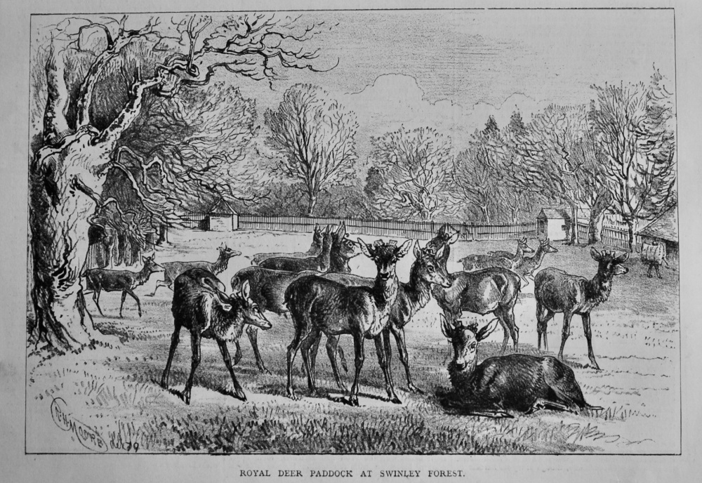 Royal Deer Paddock at Swinley Forest.  1879.