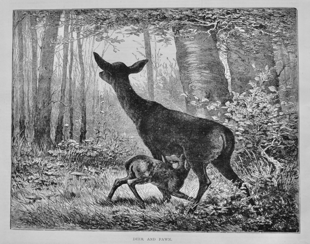 Deer and Fawn.  1879.