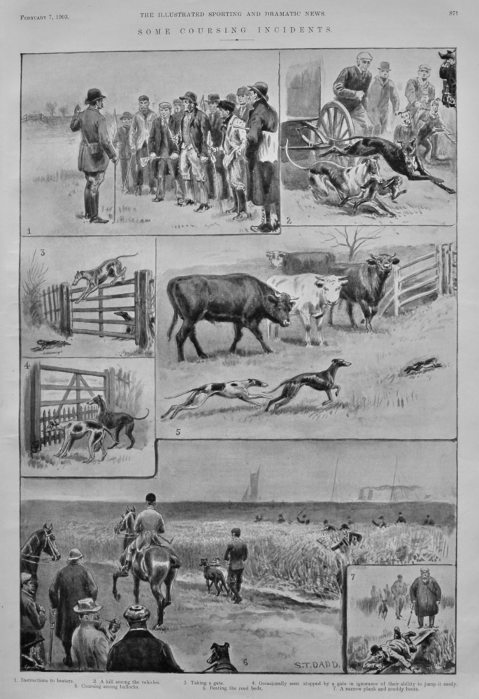 Come Coursing Incidents.  1903.