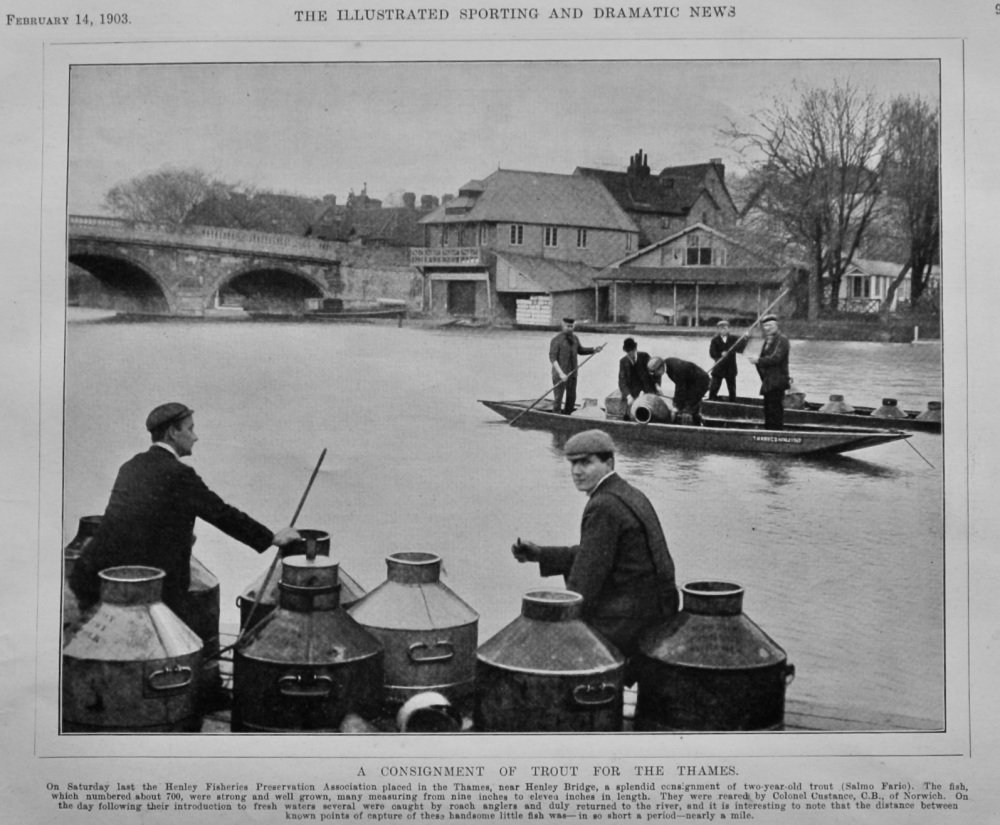 A Consignment of Trout for the Thames.  1903.