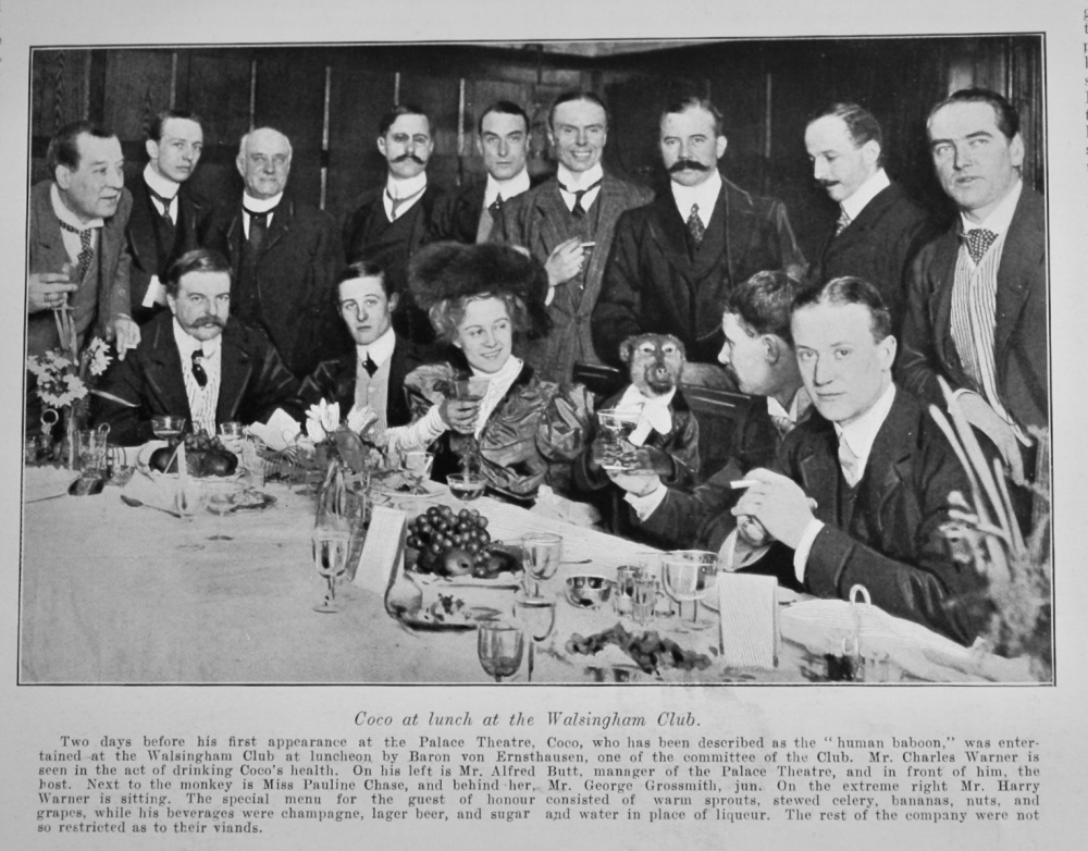 Coco at Lunch at the Walsingham Club.  1905.   (Coco the Human Baboon.)