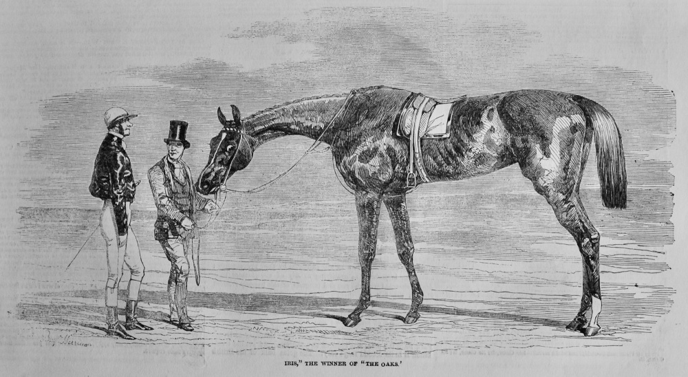 """Iris,""the Winner of ""The Oaks.""   1851."