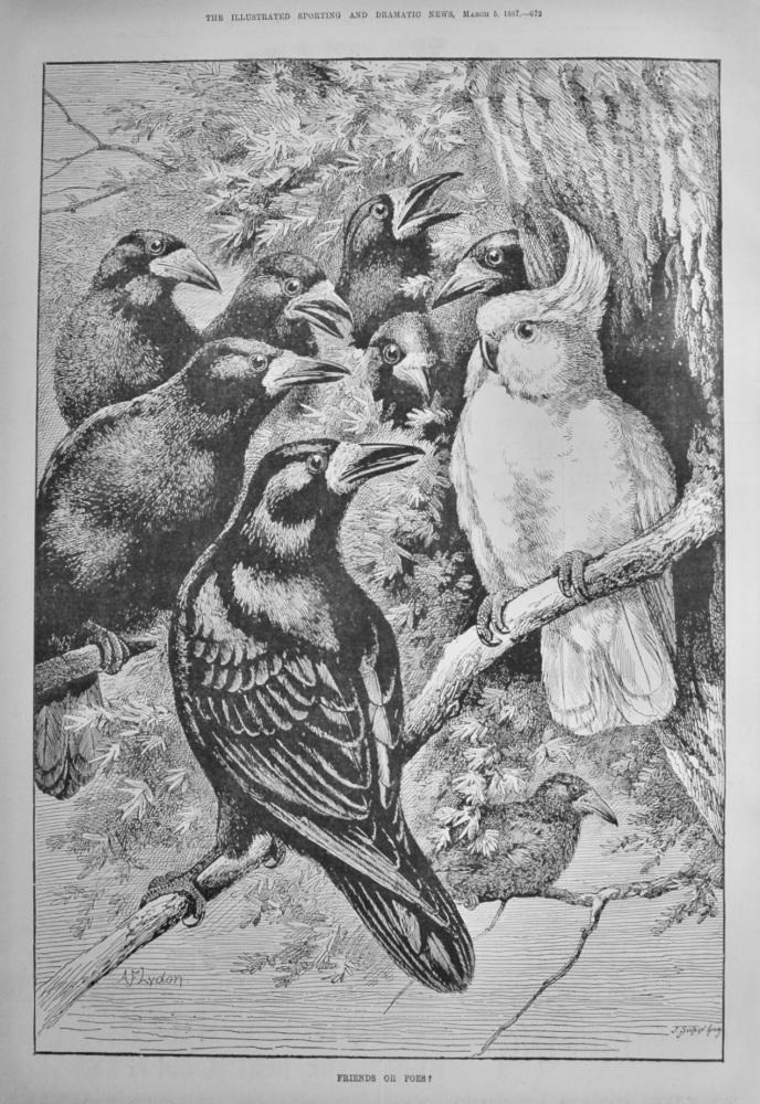 Friends or Foes ?.   1887. (Birds).