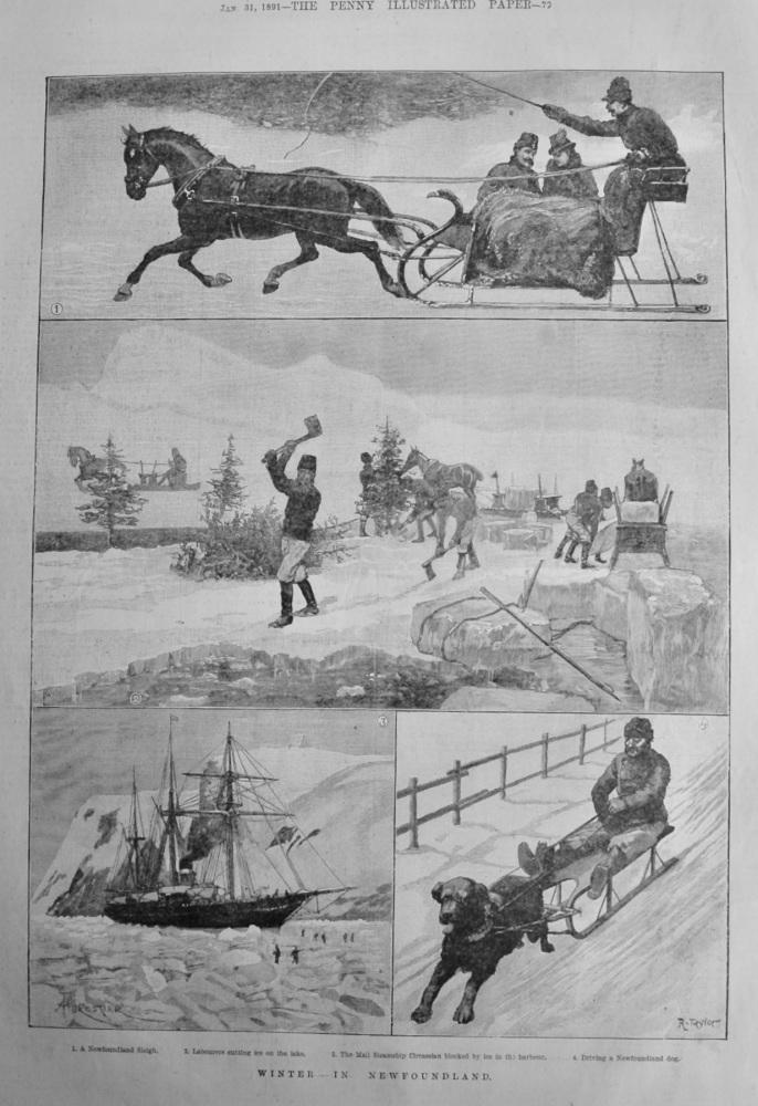 Winter in Newfoundland.  1891.