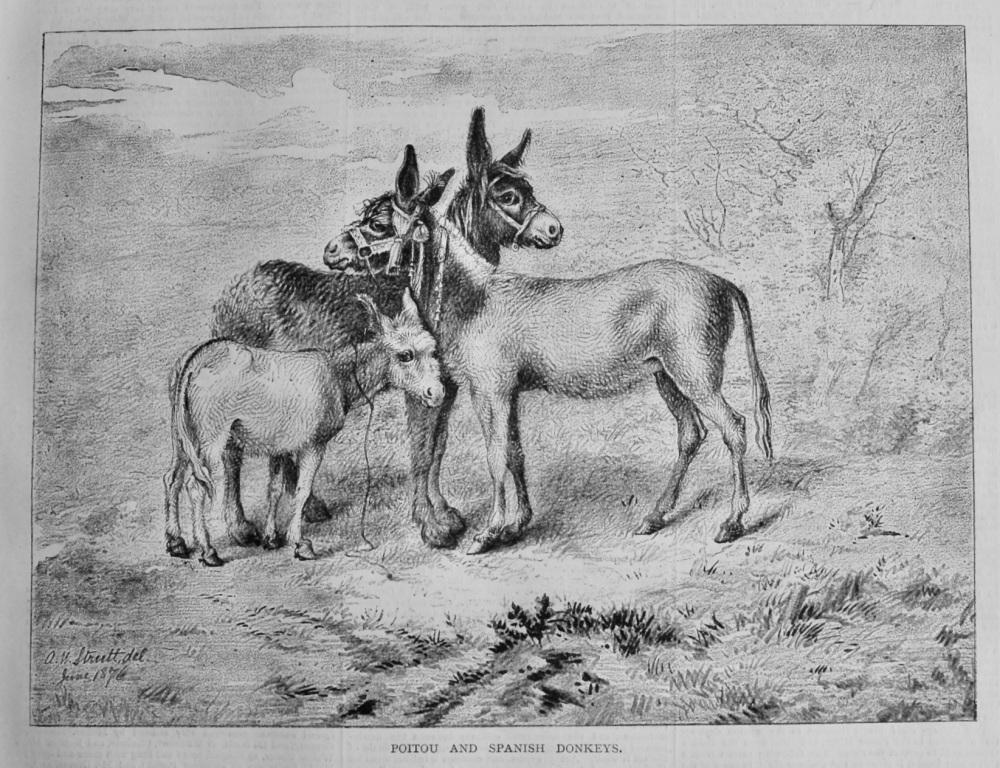 Poitou and Spanish Donkeys.  1878.