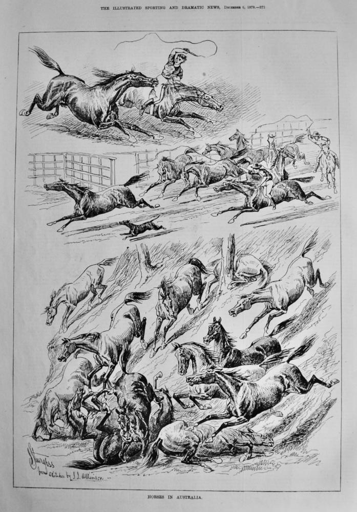 Horses in Australia.  1879