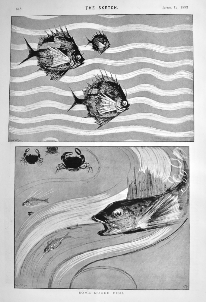 Some Queer Fish.  1893.