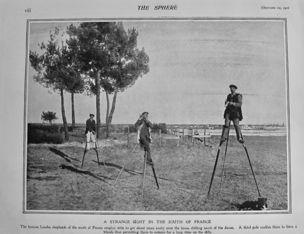 A Strange Sight in the South of France. (Landes Shepherds)  1901.