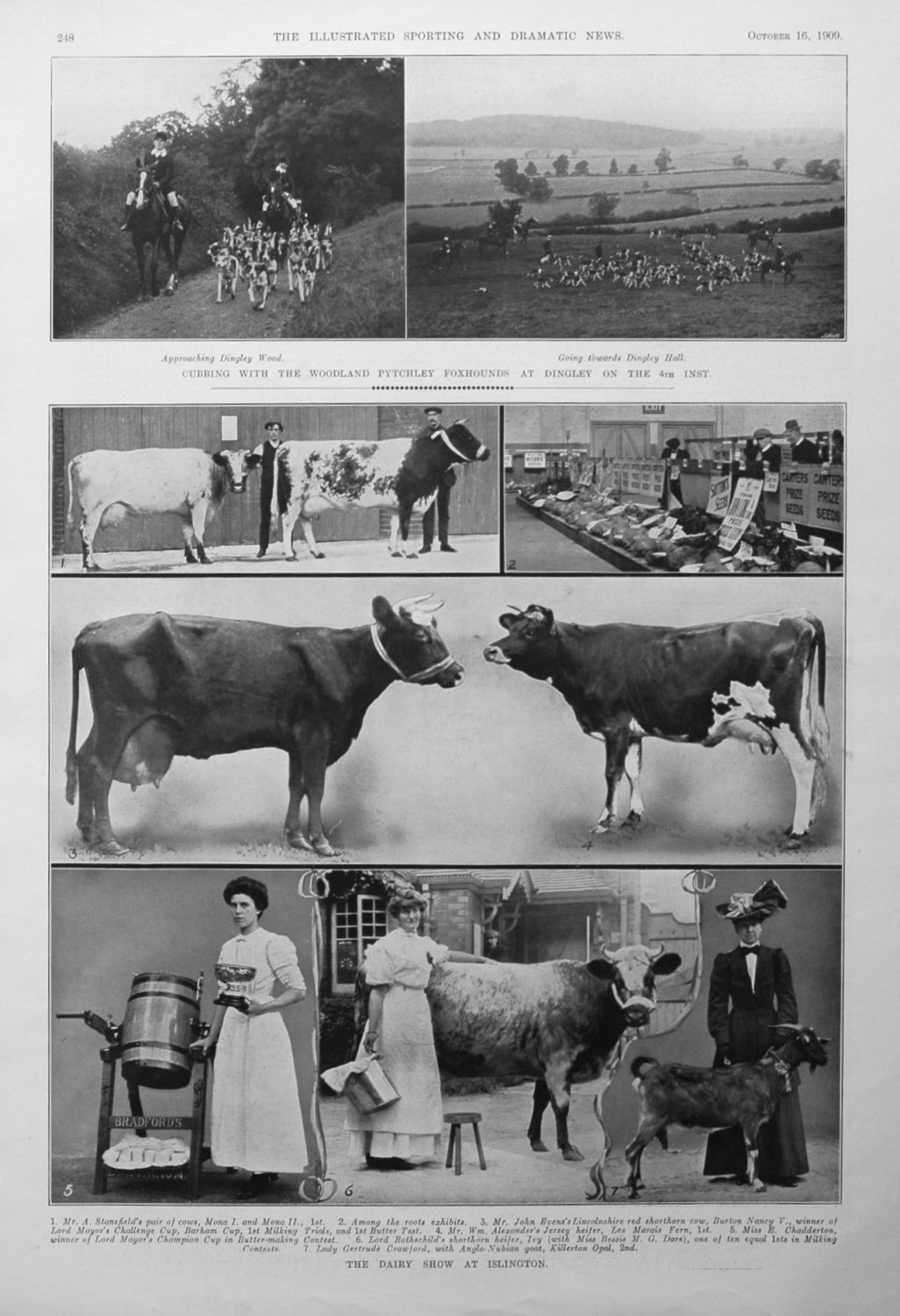 The Dairy Show at Islington.