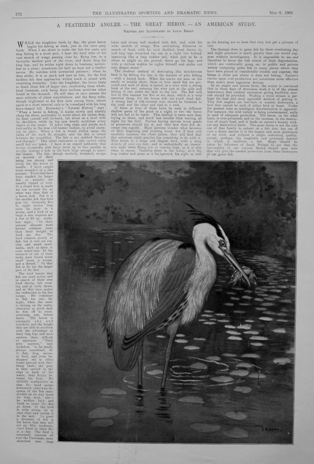 A Feathered Angler. - The Great Heron. - An American Study.