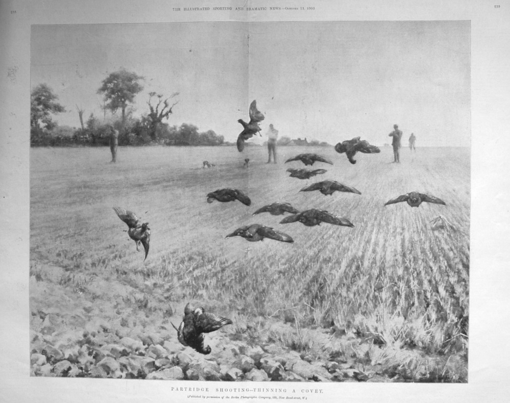 """""""Partridge Shooting - Thinning a Covey."""""""