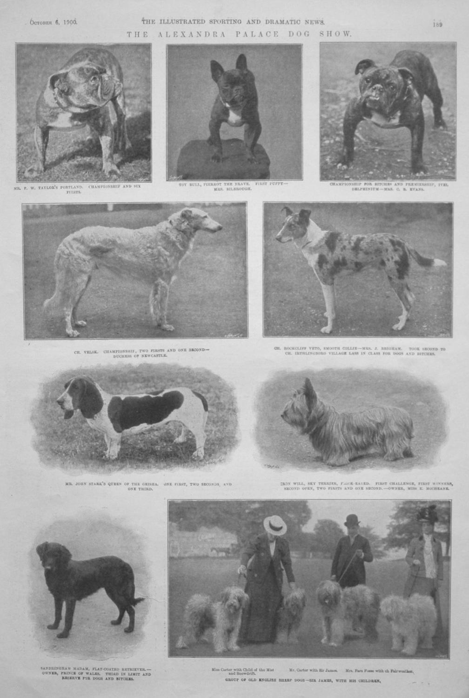 The Alexandra Palace Dog Show. 1900