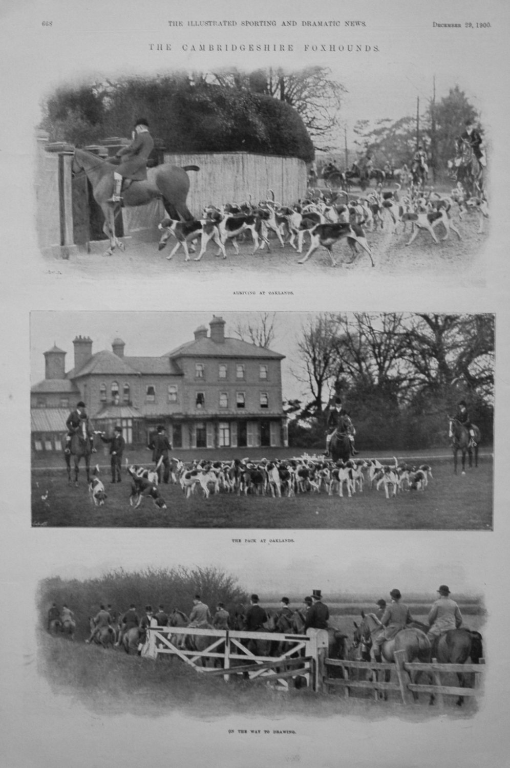 The Cambridgeshire Foxhounds.