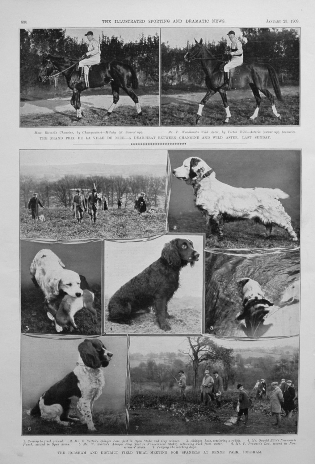 The Horsham and District Field Trial Meeting for Spaniels at Denne Park, Ho