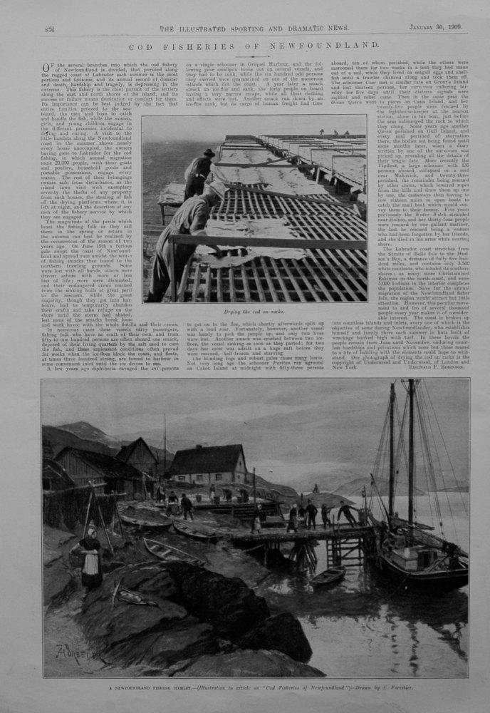 Cod Fisheries of Newfoundland.1909