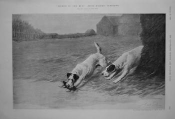 """""""Nipped in the Bud"""" (Wire Haired Terriers). 1909"""