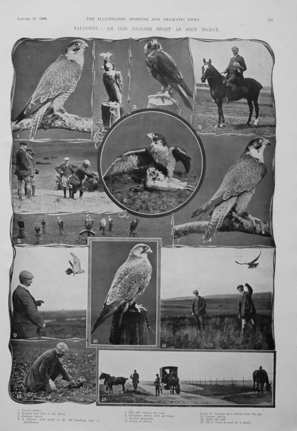 Falconry.- An Old English Sport As Seen Today. 1909