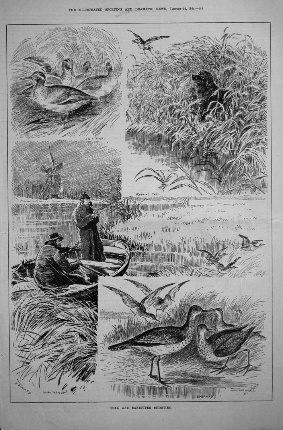 Teal and Sandpiper Shooting. 1884