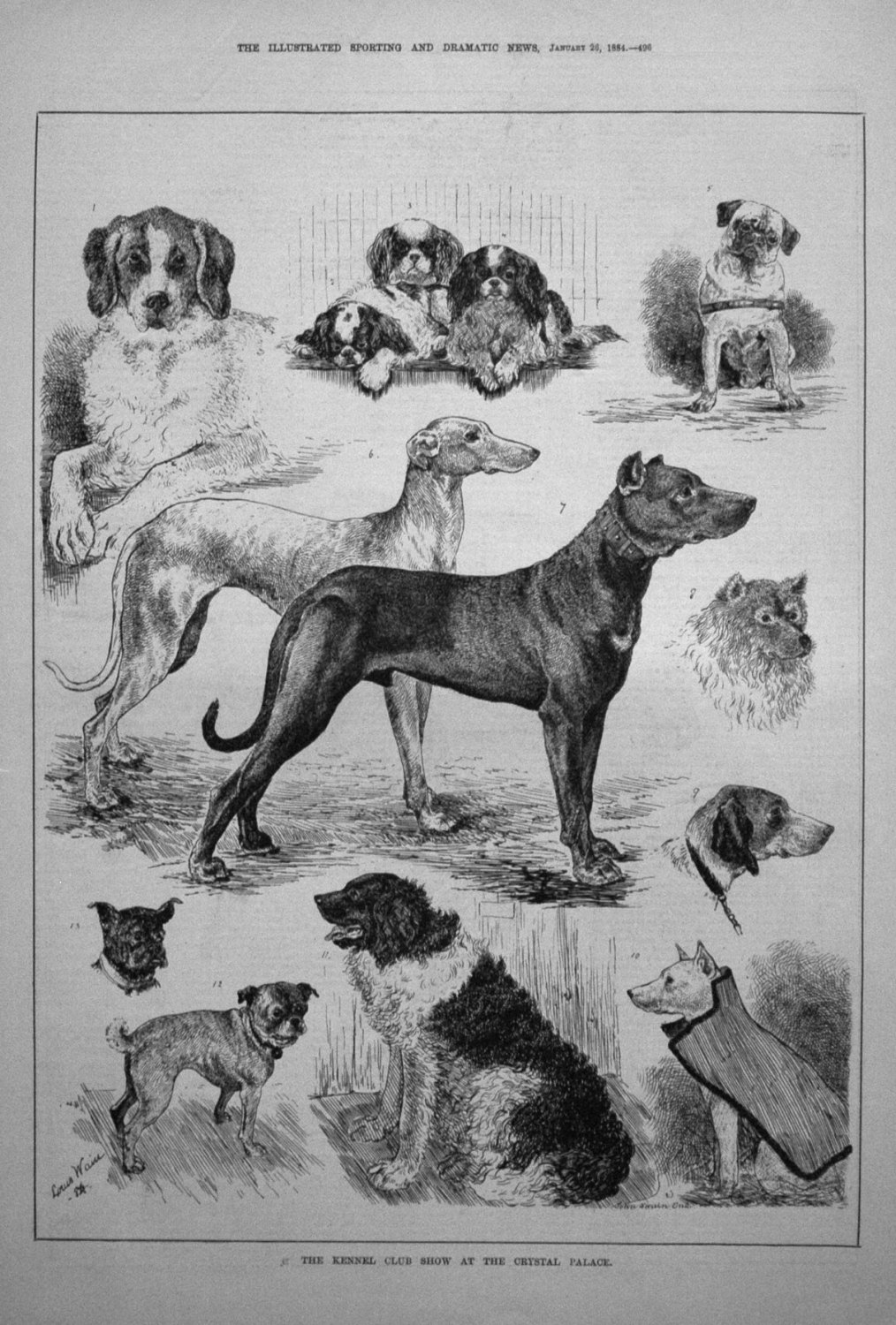 The Kennel Club Show at the Crystal Palace. 1884