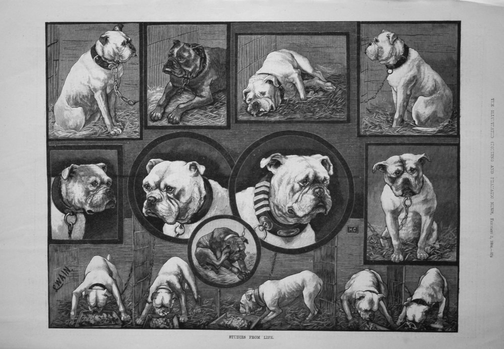 Studies from Life. 1884