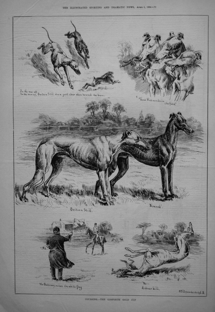 Coursing. - The Gosforth Gold Cup. 1884
