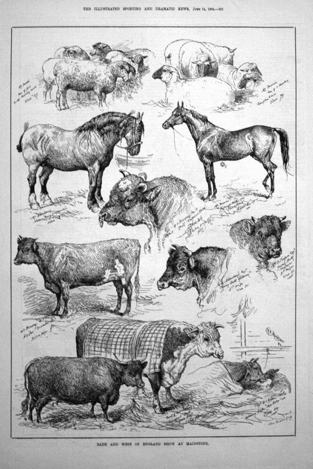 Bath and West of England Show at Maidstone. 1884