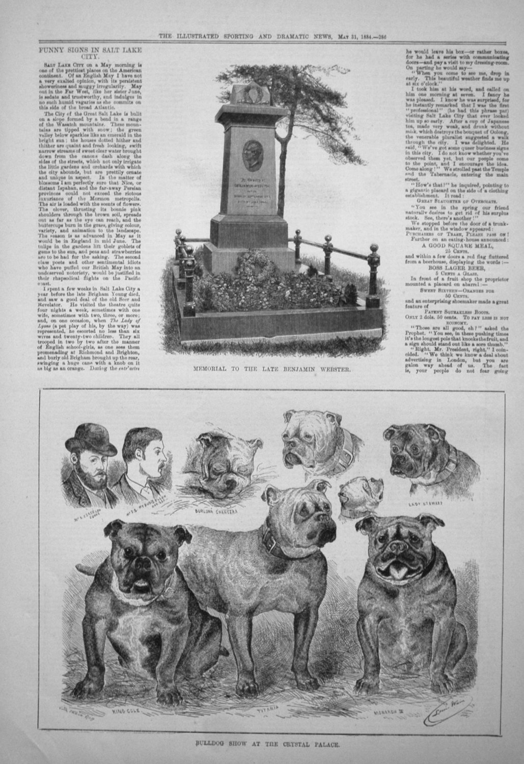 Bulldog Show at the Crystal Palace. 1884
