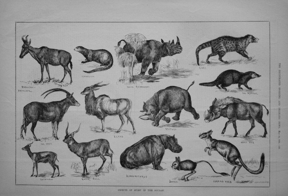 Objects of Sport in the Sudan. 1884