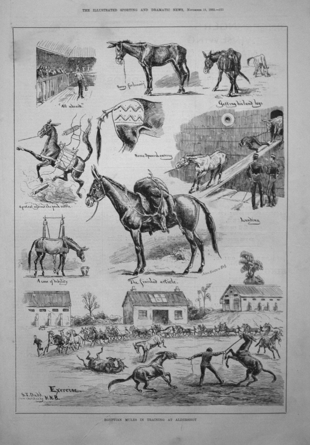 Egyptian Mules in Training at Aldershot. 1882