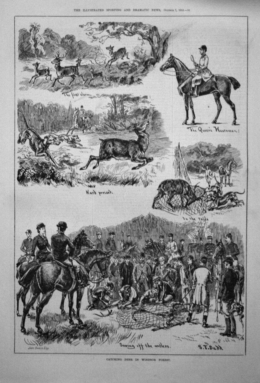 Catching Deer in Windsor Forest. 1882