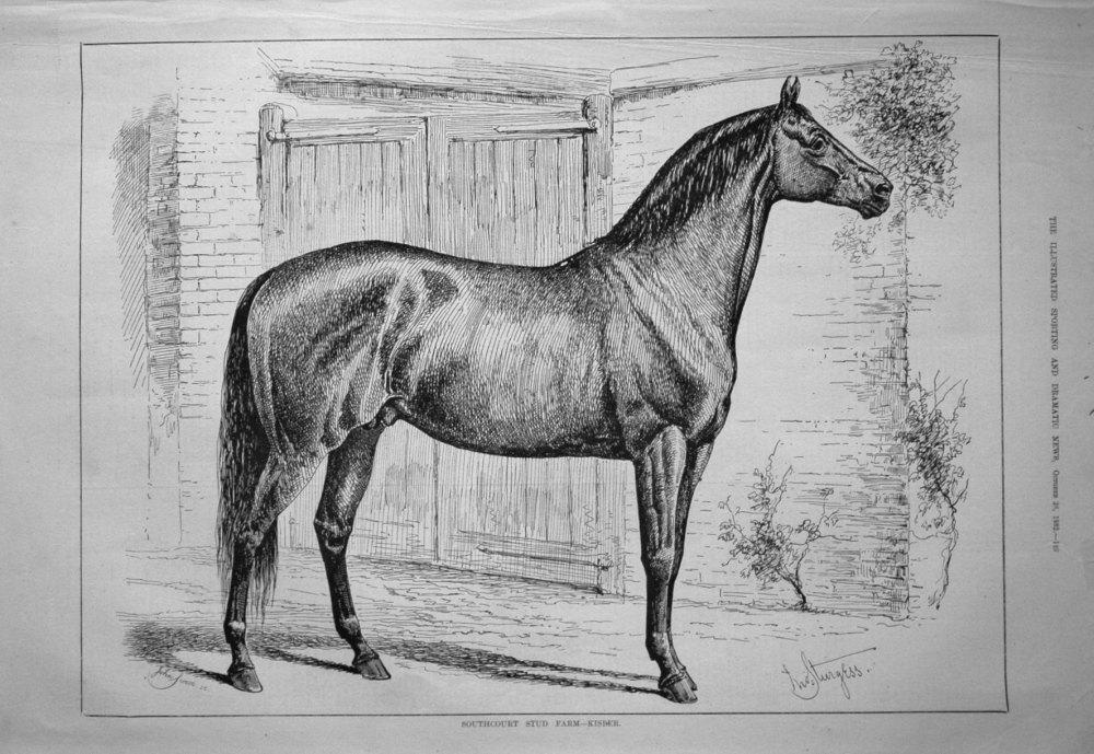 Southport Stud Farm - Kisber. 1882