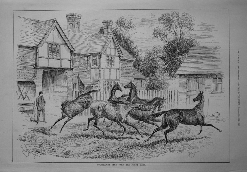Southcourt Stud Farm - The Front Yard. 1882