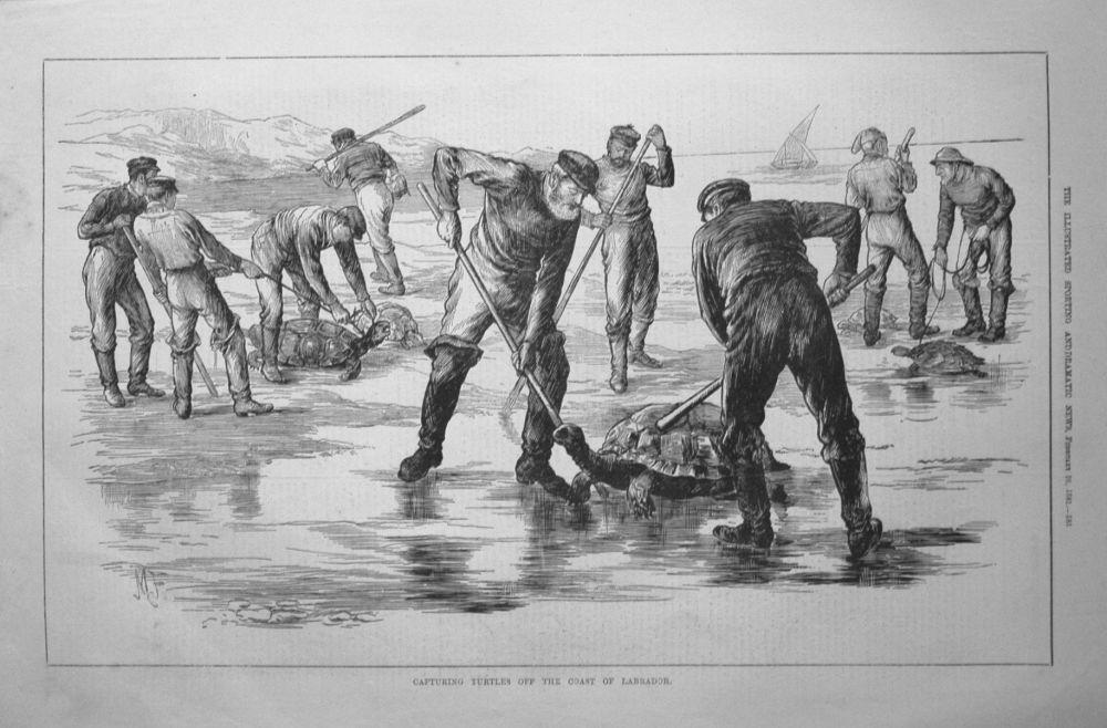 Capturing Turtles off the Coast of Labrador. 1881