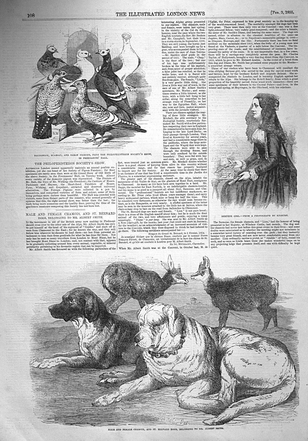 Male and Female Chamois, and St. Bernard Dogs, Belonging to Mr. Albert Smit