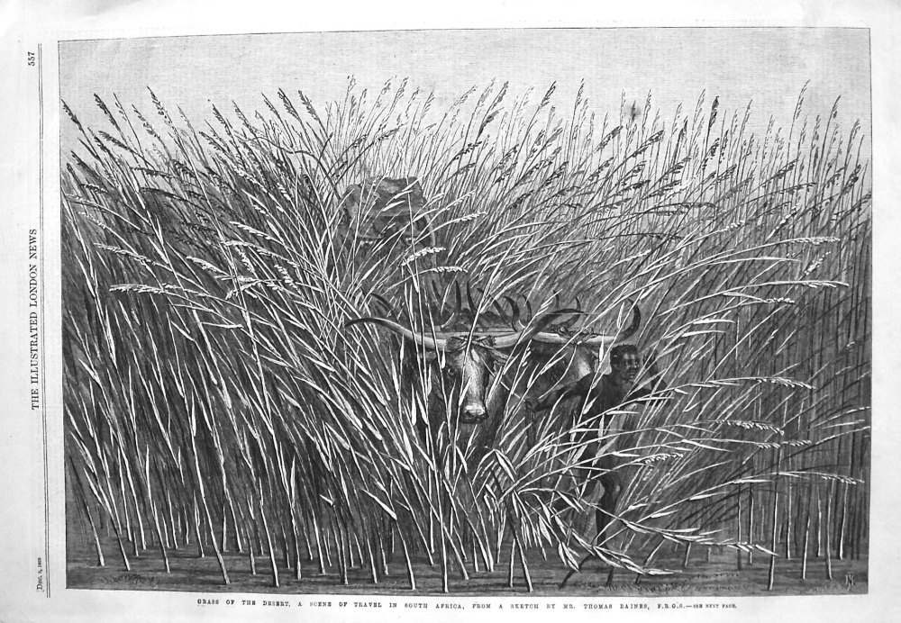 Grass of the Desert, a Scene of Travel in South Africa, from a sketch by Mr