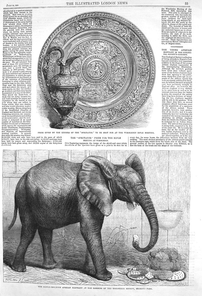 The Young African Elephant in the Zoological Society's Gardens. 1865