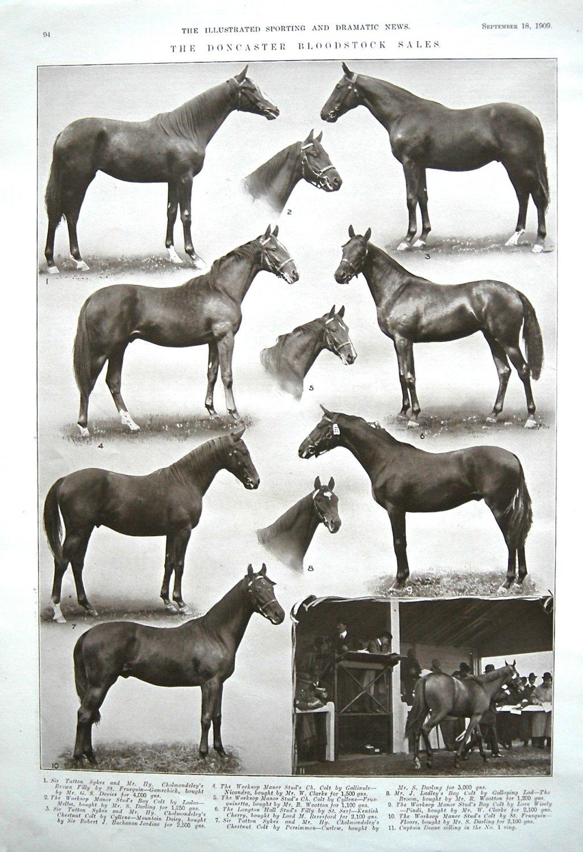 Doncaster Bloodstock Sales. 1909.