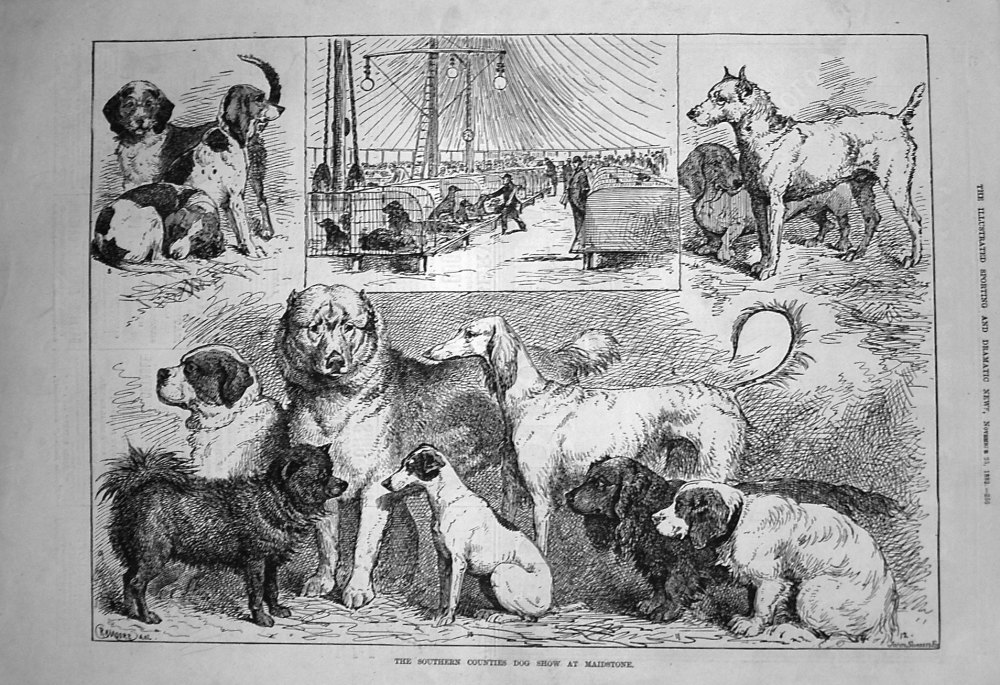 The Southern Counties Dog Show at Maidstone. 1882