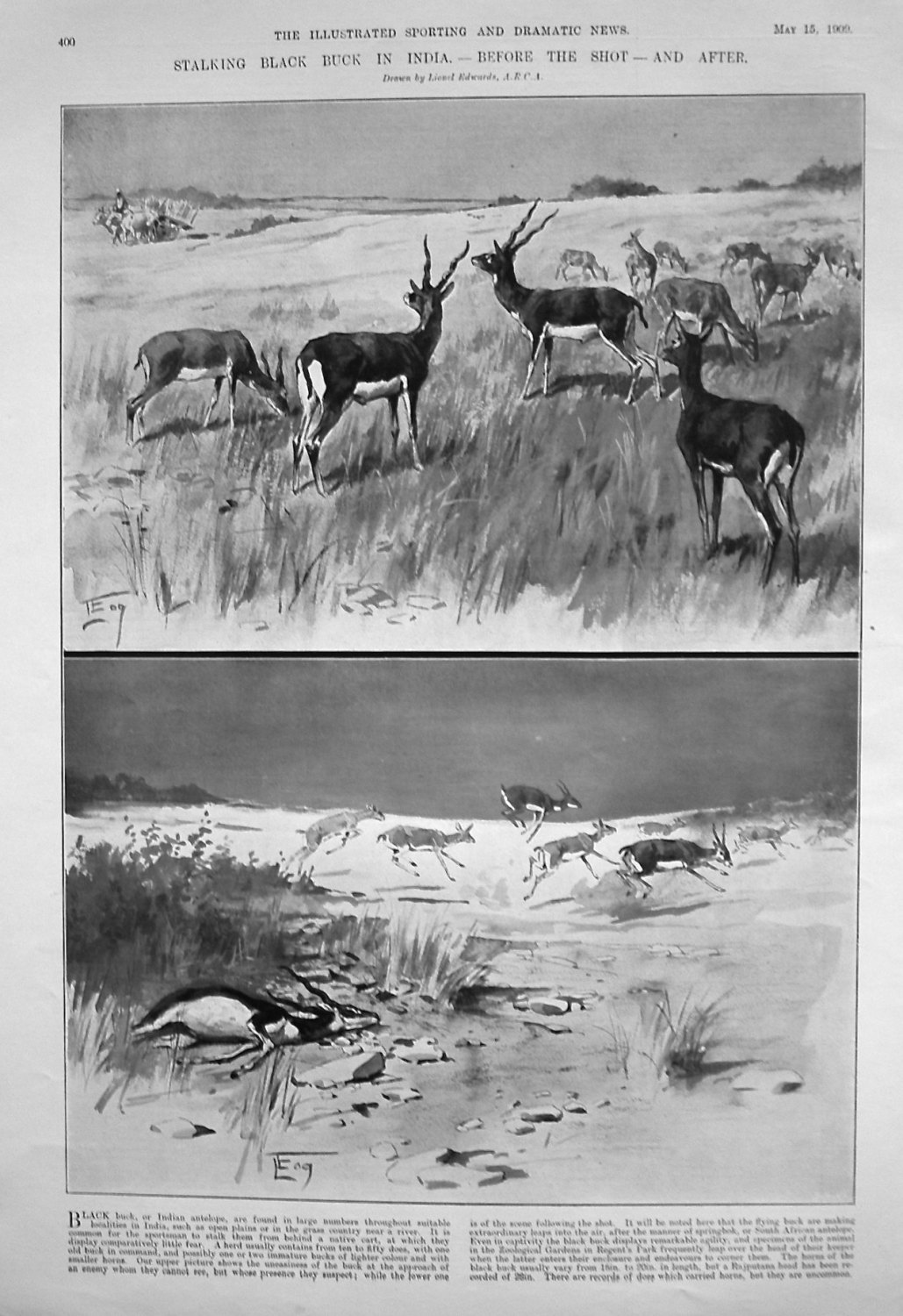 Stalking Black Buck in India. - Before the Shot - and After.