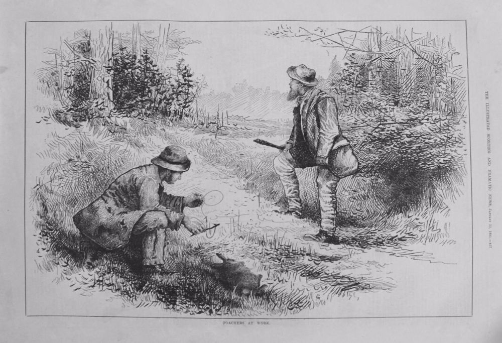 Poachers at Work. 1881