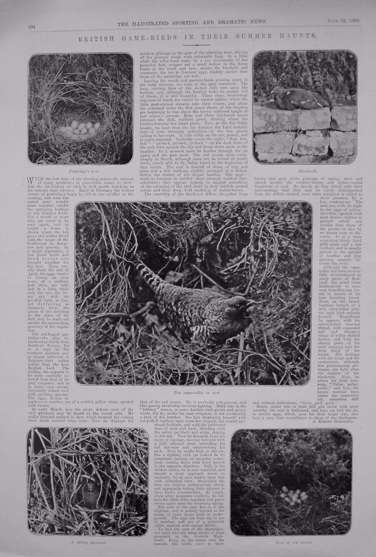 British Game-Birds in their Summer Haunts. 1909