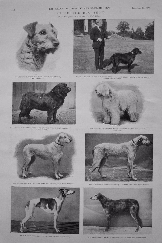 Cruft's Dog Show. February 24th 1900